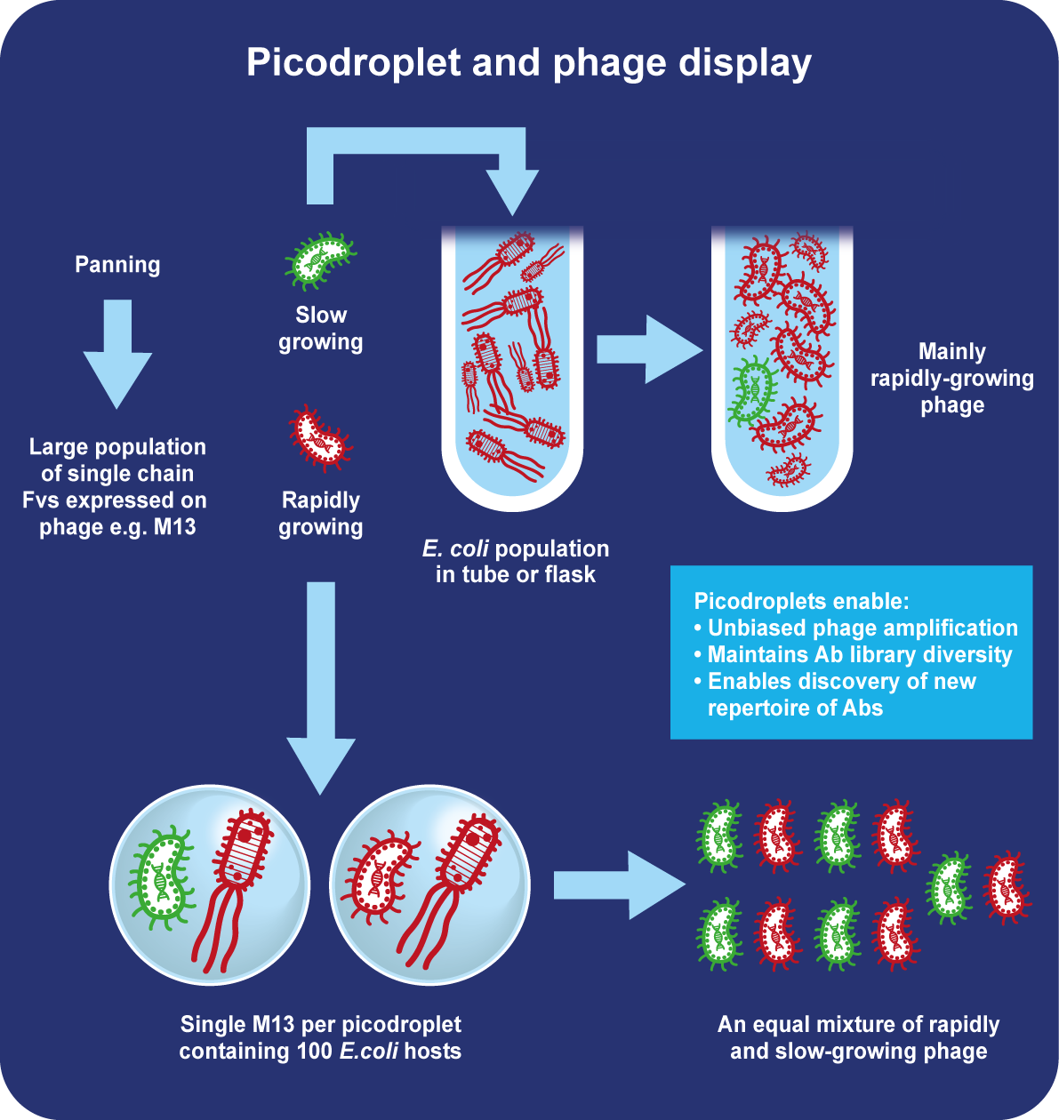 Single cell phage display